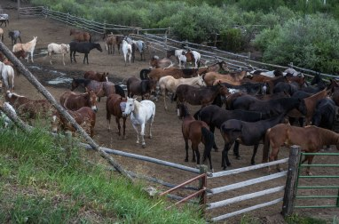 Heart 6 Ranch